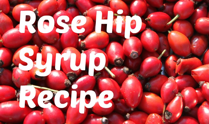 Rose Hip Syrup Braziers Park
